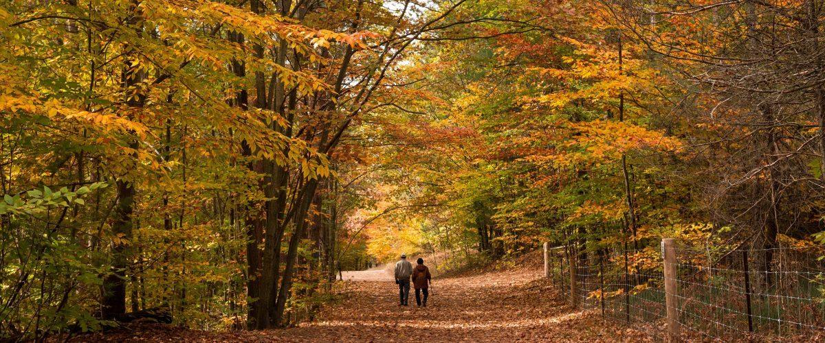 a-couple-strolls-down-a-fall-path-ow7wkxicetr68uny7lq382n2byaaesq9fauqumeo3s